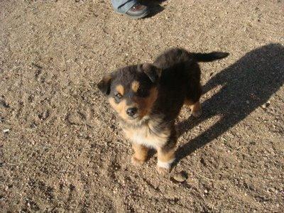 Tereldsh Nationalpark - Mongolei - Hund