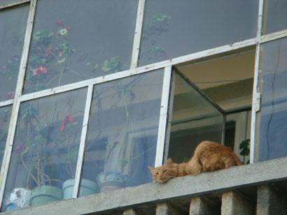 Bukarest - Katze