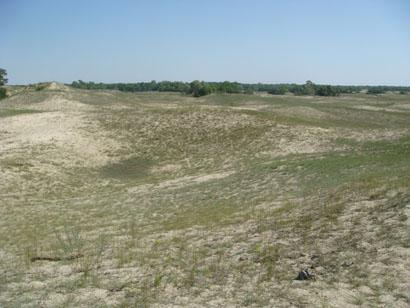 Wüstendünen von Letea - Rumänien