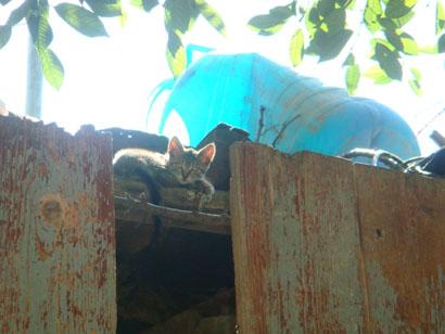 Tulcea - Katze