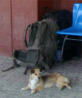 Hund passt im Bahnhof Medgidia (Rumänien) brav auf unsere Rucksäcke auf