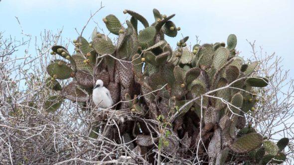 Silvester auf den Galapagos Inseln in Ecuador