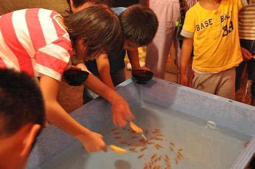 Goldfische in Aso