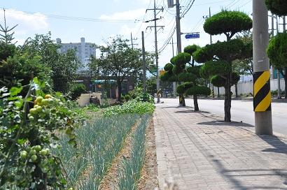 Gemüsegarten Donghae - Süd Korea
