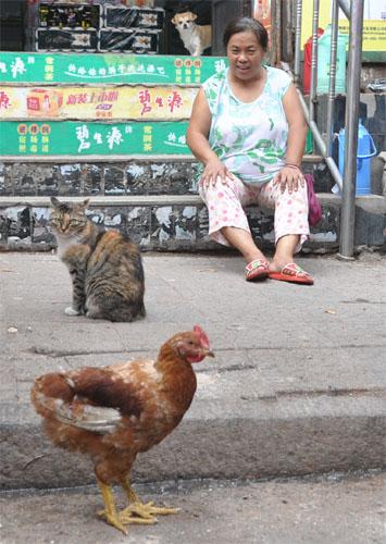 Huhn, Katze, Hund und Frau am Markt in Qingdao - China