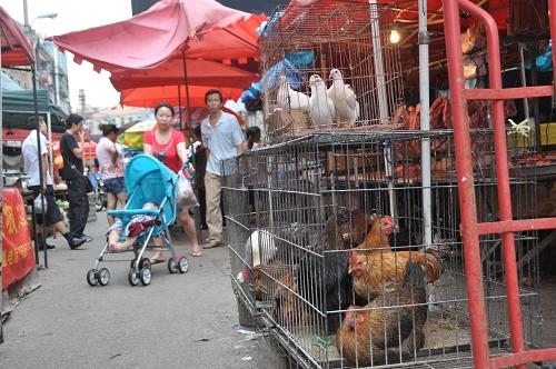 Hühner am Markt von Qingdao - China