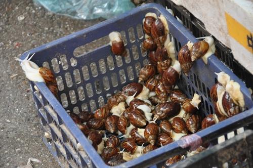 Schnecken am Markt von Qingdao - China