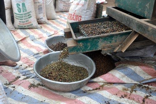 Bild: Kaffee-Verarbeitung Vietnam