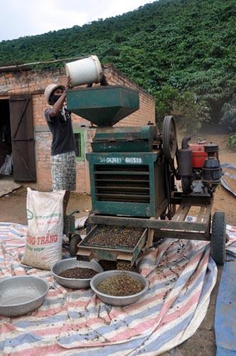 Bild: Kaffee-Verarbeitung in Vietnam