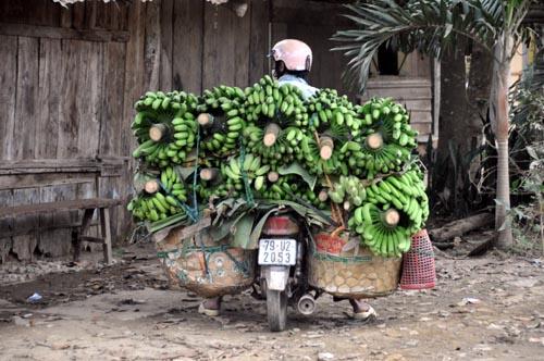 Bild: Bananen am Motorrad in Vietnam