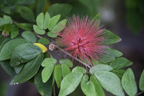 Bild: Stachelige Blüte
