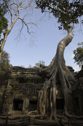 Bild: Ta Prohm Tempel in der Nähe von Angkor Wat