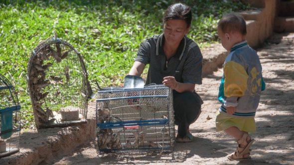 Vogelhändlerin Wat Phnom, Phnom Penh
