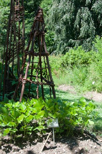 Bild: Botanischer Garten in Laibach
