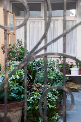 Bild: Blumen in einem Hof in Piran