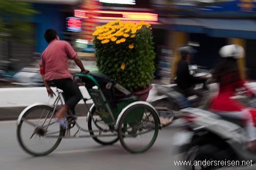 Bild: Große Töpfe mit gelben Blumen für das Tet-Fest werden auch am Cyclo transportiert