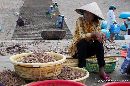 Bild: Fangfrische Garnelen in Mui Ne