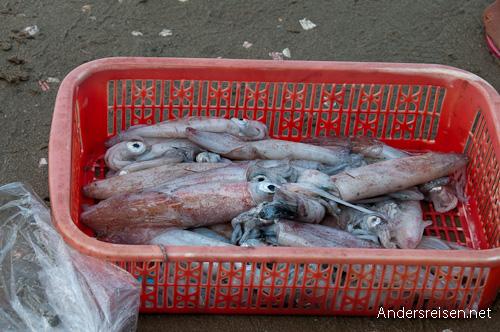 Bild: Fangfrischer Tintenfisch in Mui Ne