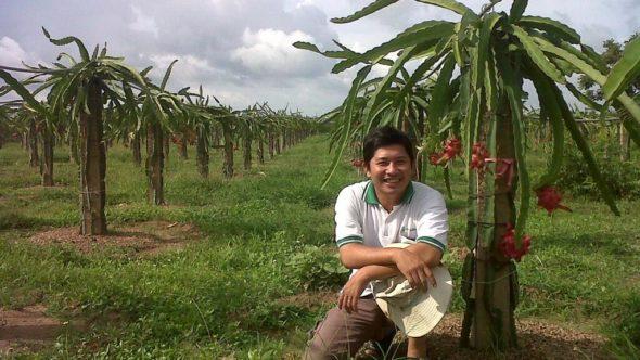 Phu bei einer Drachenfruchtpflanze mit Früchten - Bild: Nguyen Vinh Phu