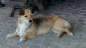 Tollwut: Achtung vor streunenden Hunden