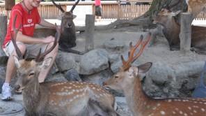 35: Hirsche, Rehe und Todaiji-Tempel inNara