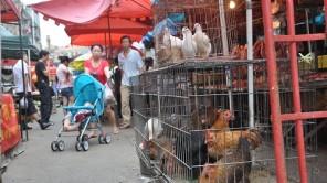 China: Markt-Bummel in Qingdao