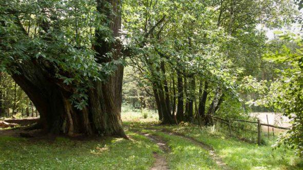 Die Radreise durchs Burgenland führt durch abwechslungsreiche Landschaft