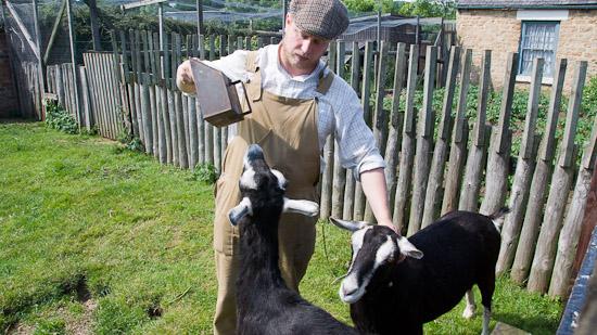 Bild: Ziegen im Beamish Museum