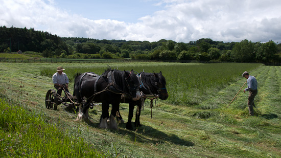 Bild: Heumaht mit Pferden in Beamish
