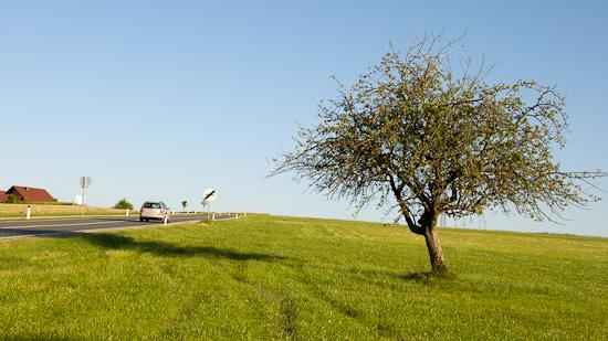 Bild: Baum Schöngumprechting