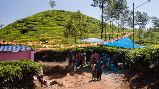 Bild: Fest in einer Teeplantage bei Munnar