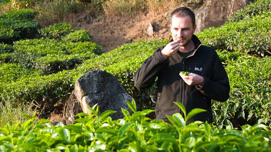 Bild: Gerhard in der Teeplantage