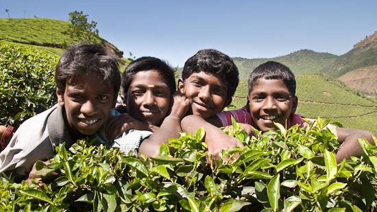 Bild: Kinder in der Teeplantage