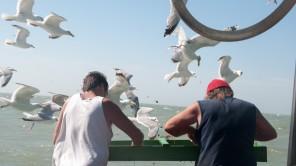 """Fischer für einen Tag: Mit der """"Crangon"""" auf Krabbenfang-Tour"""