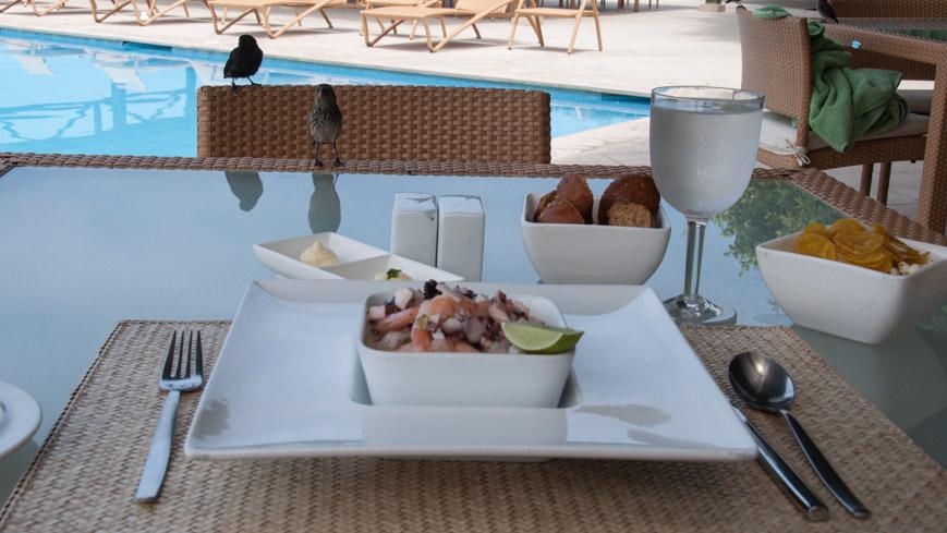 Bild: Finken im Finch Bay Hotel auf den Galapagos Inseln
