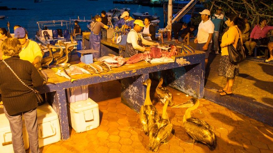 Bild: Fischmarkt in Puerto Ayora auf Santa Cruz