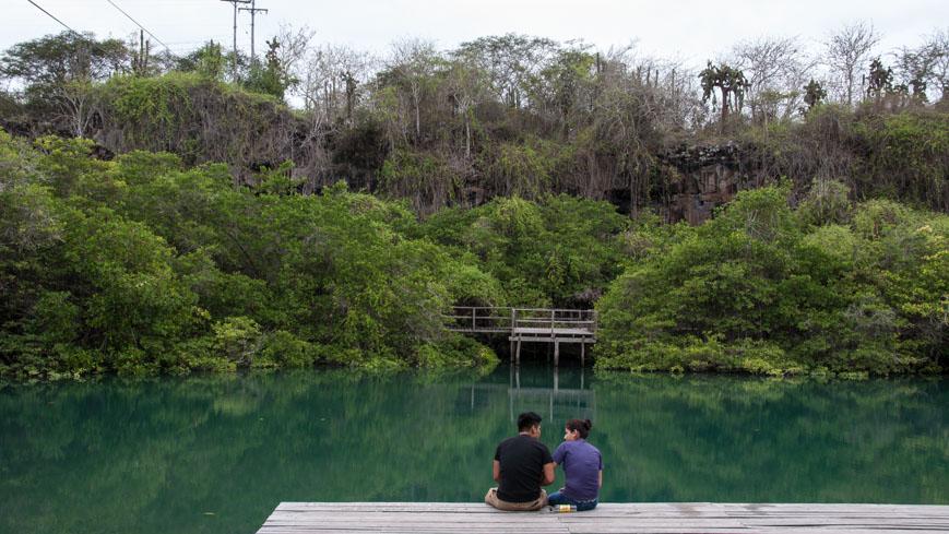 Bild: Mangrovenwald in Puerto Ayora