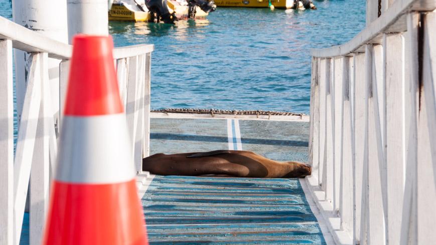 Bild: Seelöwe auf Santa Cruz