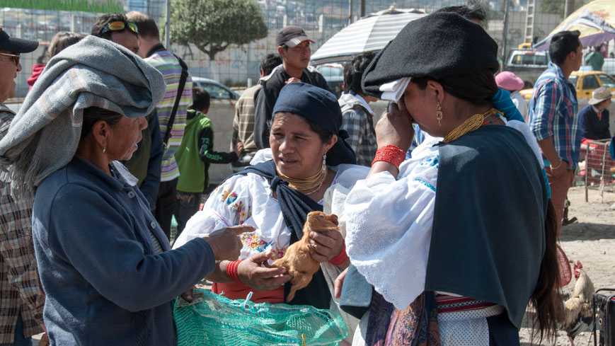 Bild: Meerschweinchen am Markt in Otavalo