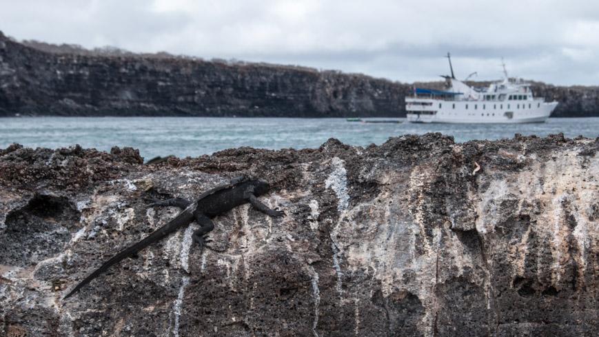 Bild: Echse auf den Galapagosinseln