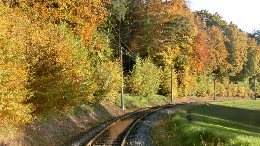 Bild: Gleichenberger Bahn am Waldrand