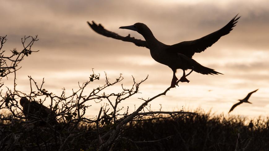 Bild: Vogel bei Sonnenuntergang
