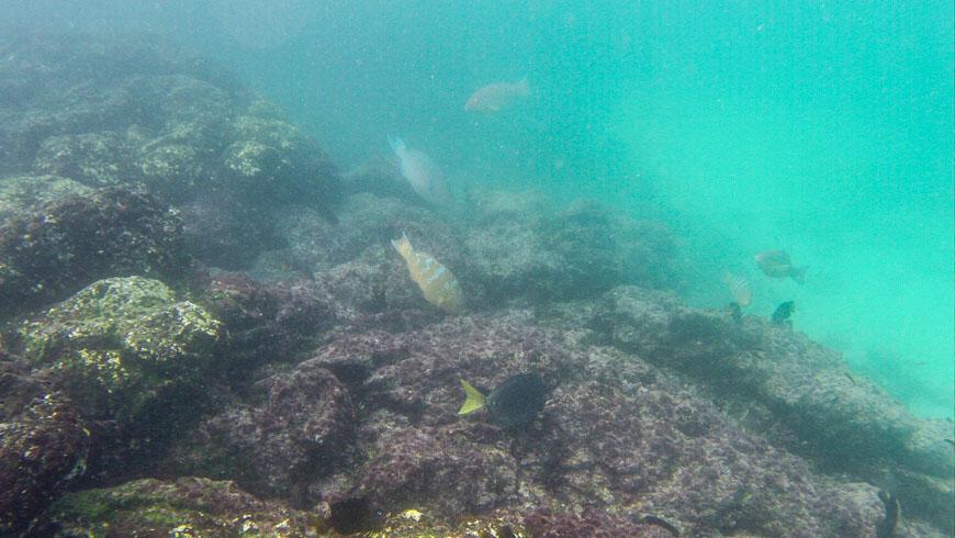 Bild: Schnorcheln Galapagosinseln
