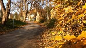 Bild: Herbst am Plainberg/Gaglham bei Salzburg
