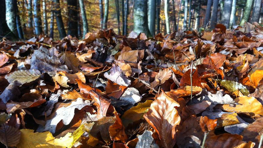 Bild: Herbstlaub am Plainberg