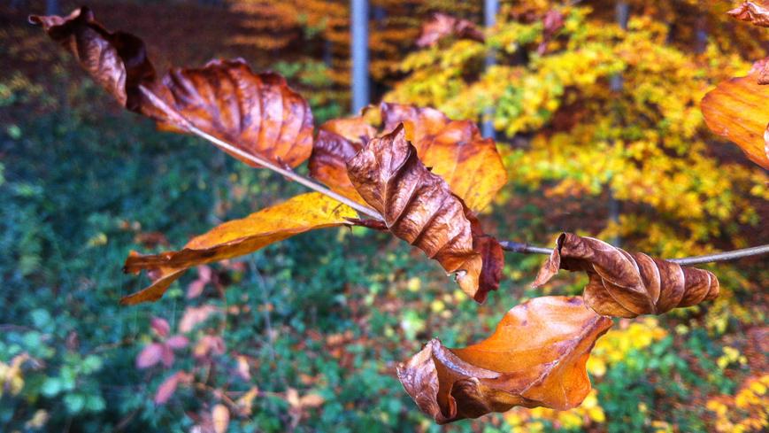 14-11-09-herbst-plainberg3