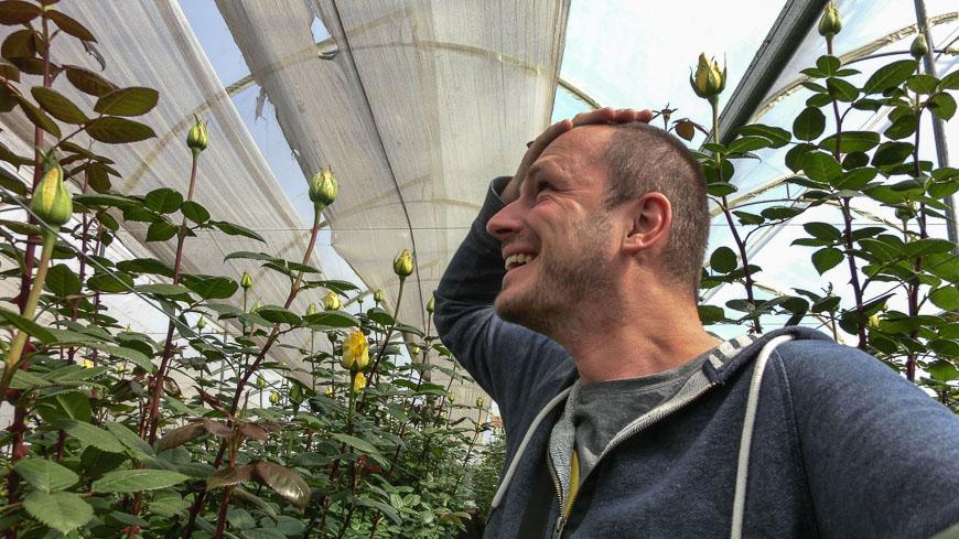 Bild: Langstielige Rosen
