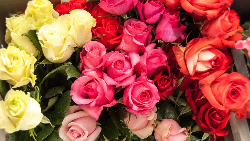 Bild: Roses Nevado