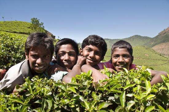 Bild: Kinder in den Teeplantagen von Munnar