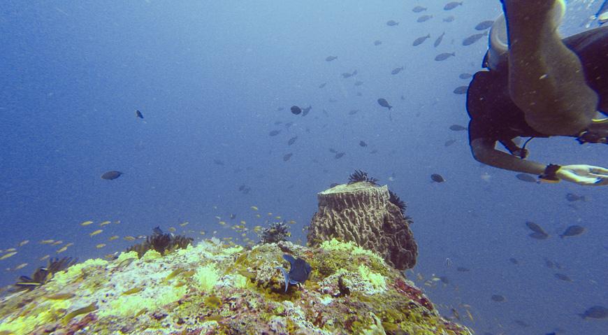 Bild: Tauchen auf den Andamanen